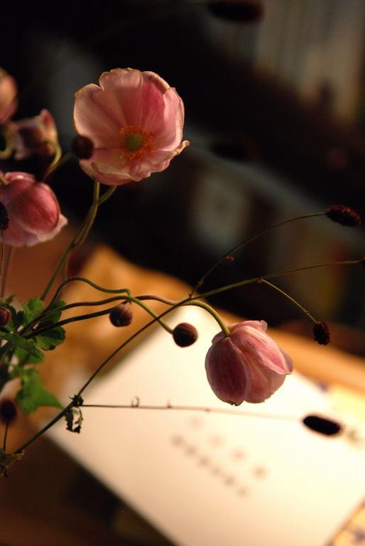 秋冥菊191