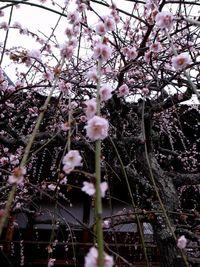 Kyoto (8)