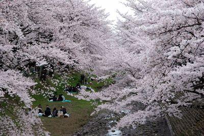 桜2011 (6)