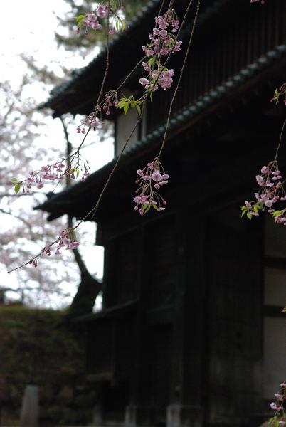 弘前2011 (17)