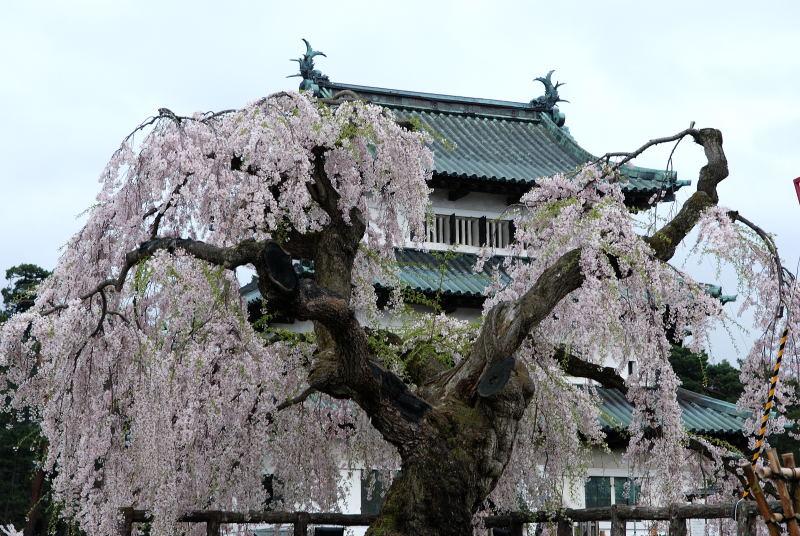 弘前2011 (11)