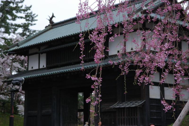 弘前2011 (18)