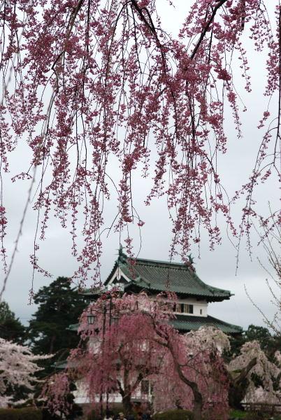 弘前2011 (9)