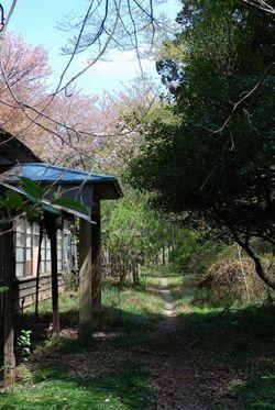 多磨全生園 (26)