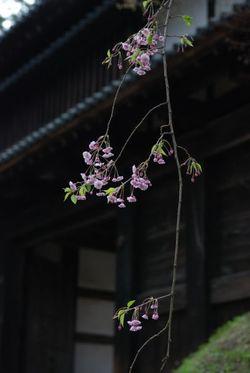弘前2011 (16)