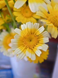 なんの花でしょう?1