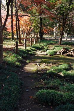 平林寺2011