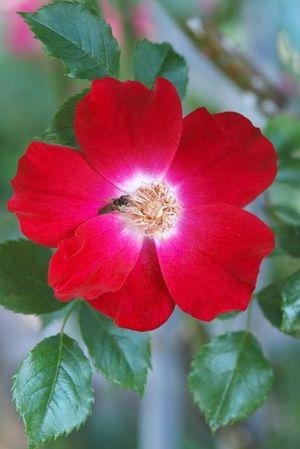 Rose&Herb Garden10