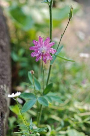 Rose&Herb Garden11