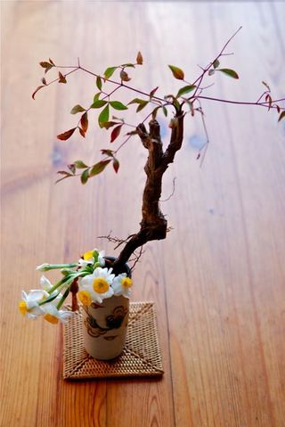 日本水仙と南天の根
