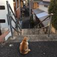 ねこ、夕暮れの町を見下ろす