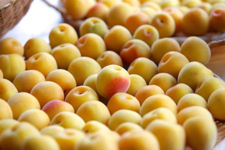 梅干し用の梅