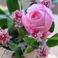 沈丁花とヘルシューレン
