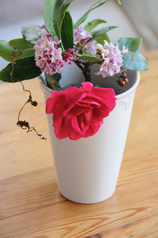 沈丁花と国色天香