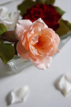 Roses044