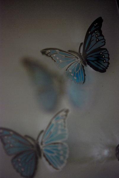Swallowtail ③