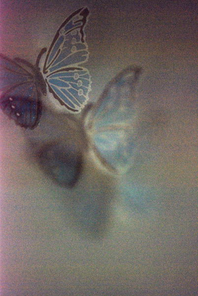 Swallowtail ④