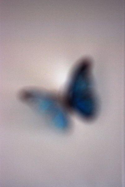 Swallowtail ⑤